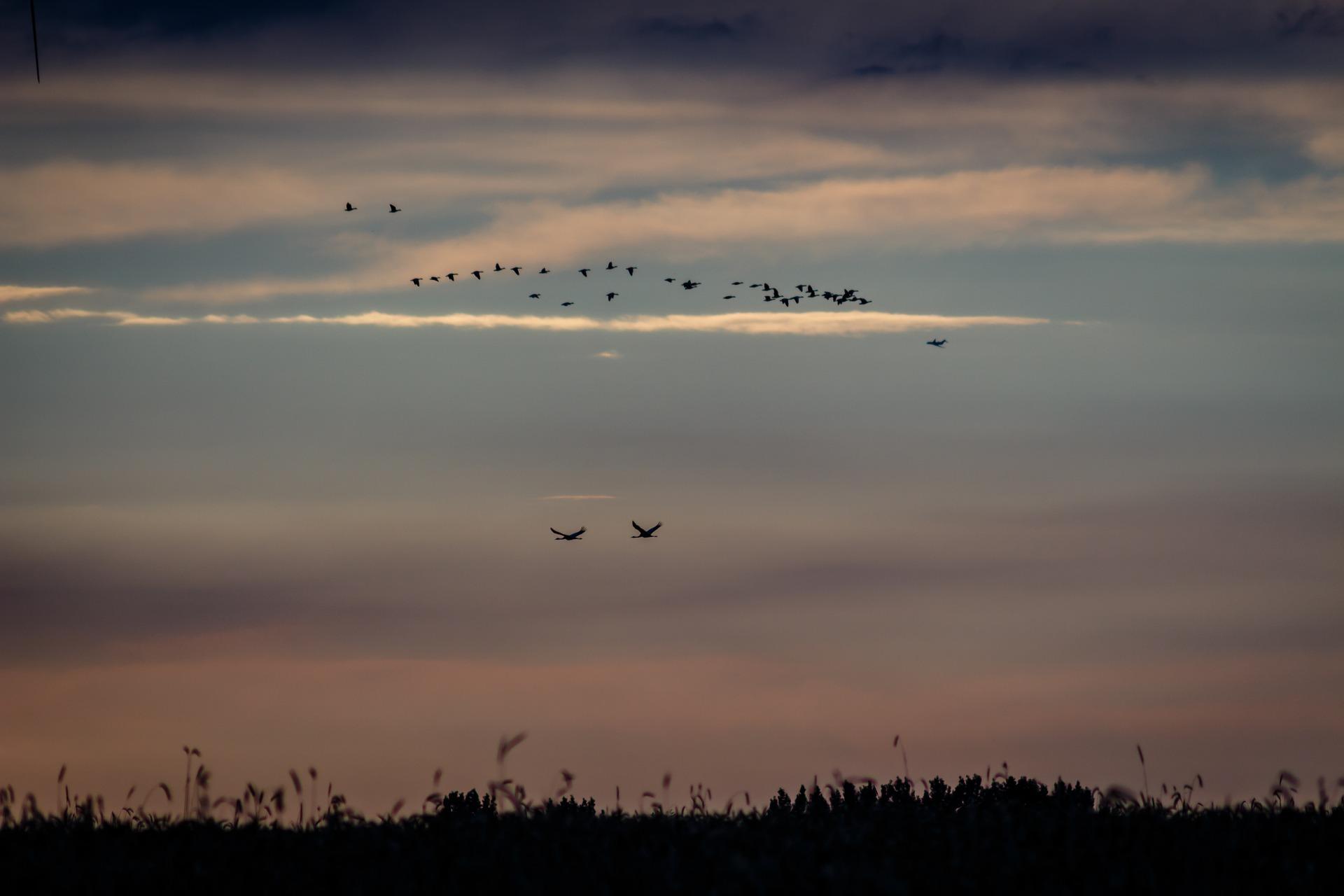 birds-1633374_1920